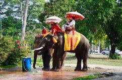 Traveler riding elephant for tour around Ayutthaya ancient city Stock Photos