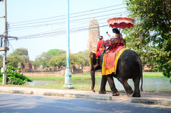Traveler riding elephant for tour around Ayutthaya ancient city Stock Photography