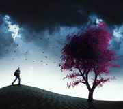 Running to a red tree. Traveler running to a red tree in the desert Stock Images