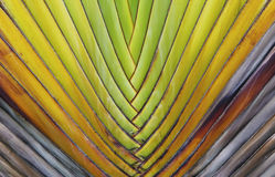 Travelers palm pattern Stock Photography