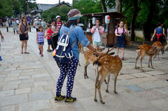 Traveler shooting photo with deers at garden of Todai-ji Temple Royalty Free Stock Photos
