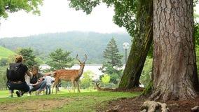 Traveler shooting photo with deers at garden of Todai-ji Temple in Nara, Japan stock footage