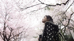 A traveler Sightseeing Cherry blossom Stock Photography