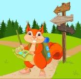 Traveler Squirrel follows the route Stock Photos