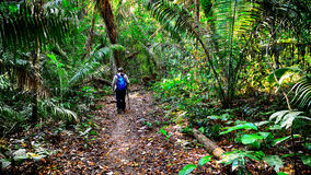 Traveler is walking on a footpath in a jungle Royalty Free Stock Photo