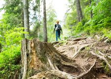 Traveler is walking in the forest. Alone Royalty Free Stock Photos