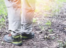 Traveler walking in forest in the mountains - Man hiker legs and feet in shoes stock photography