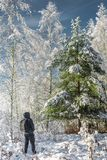 traveler in the winter forest/traveler with a backpack in the wi royalty free stock photo