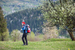 Traveler woman with a backpack near blooming tree. Tourist woman in a red scarf on her head and blue jacket with a backpack on top of hill near blooming tree Royalty Free Stock Photo