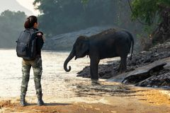 Traveler women backpack standing and seeing the wild elephant in the beautiful forest at Kanchanaburi province in Thailand for the stock images