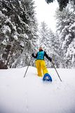 Traveler, woman goes snowshoeing among huge pine trees. Covered with snow, during snowfall. Epic winter adventure in the mountains. Wide angle royalty free stock photos