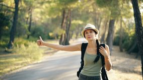 Traveler woman hitchhiking on a sunny forest road. Tourist girl looking for ride to start her journey stock video footage