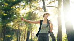 Traveler woman hitchhiking on a sunny forest road. Tourist girl looking for ride to start her journey. Traveler woman hitchhiking on a sunny forest country road stock footage