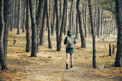 Traveler woman walking in a pine forest Stock Photos