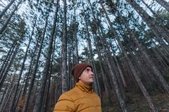 Traveler yellow jacket in a pine forest with tall trees. Leisure royalty free stock photo