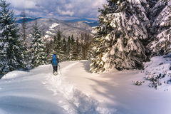 Travelers with a backpacks walking along the road through the forest in the winter mountains. Royalty Free Stock Image