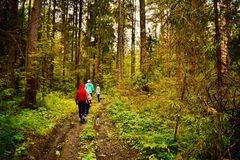 Travelers go in the green forest on footpath on summer stock photography