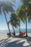 Playa giron, Cuba – January 2, 2017: Travelers relaxing on hammocks with bikes on tropical beach in Cuba, travel concept royalty free stock image
