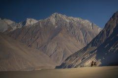 Travelers riding camels Nubra Valley Ladakh ,India. Stock Photography