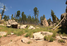 Traveling along the needles highway Royalty Free Stock Images