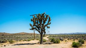Traveling in America. The Mojave Desert in the United States. Trip to the natural attractions of the United States. Desert Mojave, California. Deserted trees and Royalty Free Stock Images