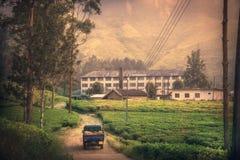 Traveling Asia Sri Lanka on tea factory plantation fields sunrise scenery in Sri Lanka Nuwara Eliya. Tea factory stock images