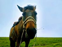 Traveling in big mountain with horse. Gives a pose in front of the camera. Traveling . Horse gives me a pose stock image