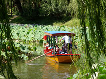 Traveling in a boat among the lotus Stock Photography