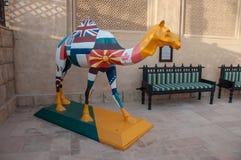 Traveling camel, Dubai, UAE Royalty Free Stock Photo