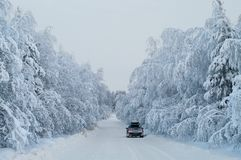 Traveling on car along winter road with hanging snowy pine branches in wood, Karelia, Russia Royalty Free Stock Photos