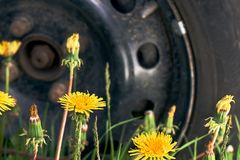Traveling concept. Tire service concept. Car wheel standing on the green grass with yellow dandelians. Departure by car in the countryside. Car wheel standing royalty free stock photo