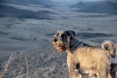 Traveling with dogs royalty free stock photography