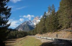 traveling Een mooi landschap Alpicbergen, net bos stock fotografie
