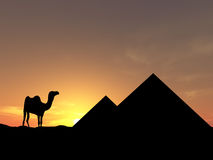 Traveling in Egypt. Camel near pyramid over sunset Royalty Free Stock Image