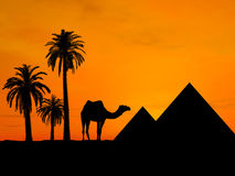 Traveling in Egypt. Camael near pyramid over orange sky Stock Images