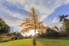 Traveling in the Hotham Park, Bognor Regis, United Kingdom. Around morning Stock Photos