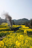 Traveling between Leshan City, Sichuan Qianwei Ka Yan Yang train bees to the small train station canola flower Royalty Free Stock Images