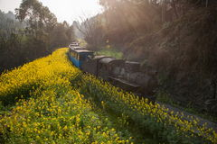 Traveling between Leshan City, Sichuan Qianwei Ka Yan Yang train bees to the small train station canola flower Royalty Free Stock Photography
