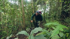 Traveling man with backpack walking on jungle forest. Tourist man hiking in wild rainforest among tropical trees and stock video
