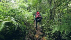 Traveling man with backpack walking on path in tropical forest while travel in wild jungle. Tourist man hiking in stock video footage