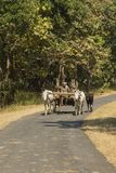 Travel in India: Oxen and Cart stock photo
