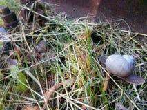 Traveling snail Stock Photo