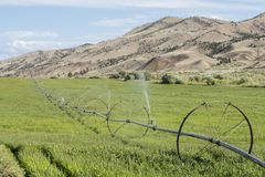 Traveling sprinkler irrigates crop for animal feed Stock Images