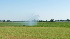 Traveling sprinkler in a maize field. stock video footage