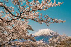 Traveling to Japan in April. Mostly to admire the beauty of cherry blossoms at Mount Fuji. The full bloom. It is a natural colorat. Traveling to kanto Japan in stock photography