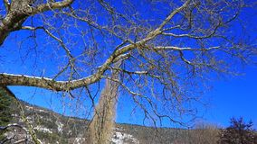Traveling from a tree in Pyrenean landscape in winter,  France. Traveling from a tree in Pyrenean landscape in winter, Aude in south of France stock video