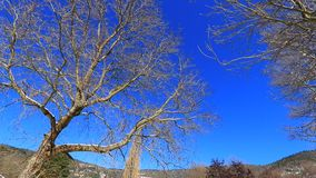 Traveling from a tree in Pyrenean landscape in winter,  France. Traveling from a tree in Pyrenean landscape in winter, Aude in south of France stock footage