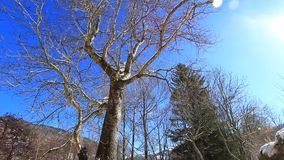 Traveling from a tree in Pyrenean landscape in winter,  France. Traveling from a tree in Pyrenean landscape in winter with shining sun, Aude in south of France stock video