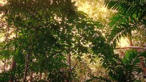 Traveling Through Tropical Rainforest In Sunny Glow. Moving through tropical jungle in bright sunny glow stock video