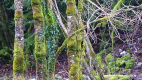 Traveling video around a branch covered with moss in pyrenean forest. Aude in south of France stock video footage
